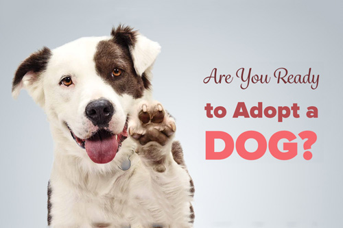 Are You Really Ready to Adopt a Dog?