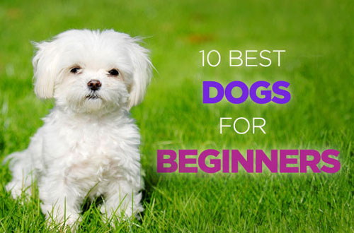 Best Dogs for Beginners