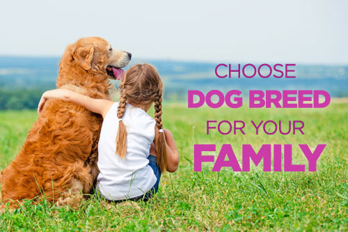 Choose The Right Dog Breed for Your Family