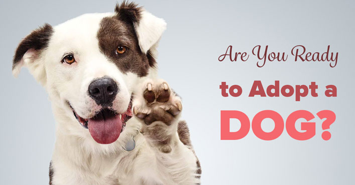 Are You Really Ready to Adopt a Dog? 8 Questions to Ask Yourself
