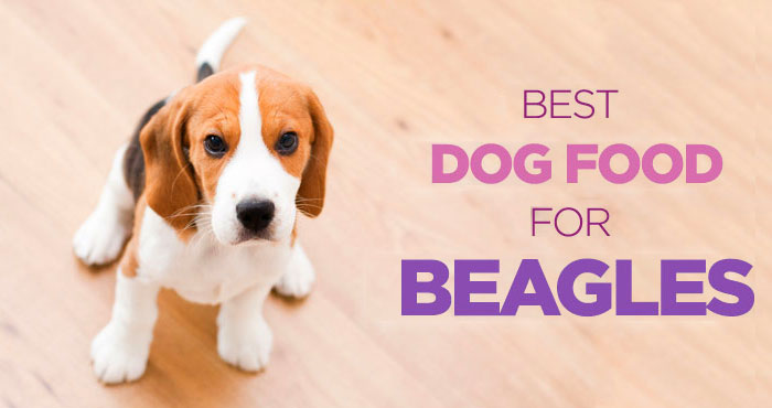 Best Dog Food for Beagles: High Protein & Low Carb Diet