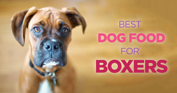 Best Dog Food For Boxers High Protein Diet Is The Key
