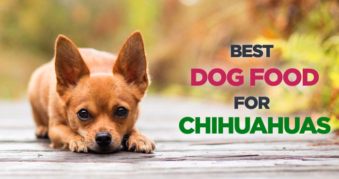 Best Dog Food for Chihuahuas: Choosing The Right Dog Food