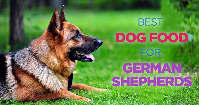 German shepherd food sensitivity