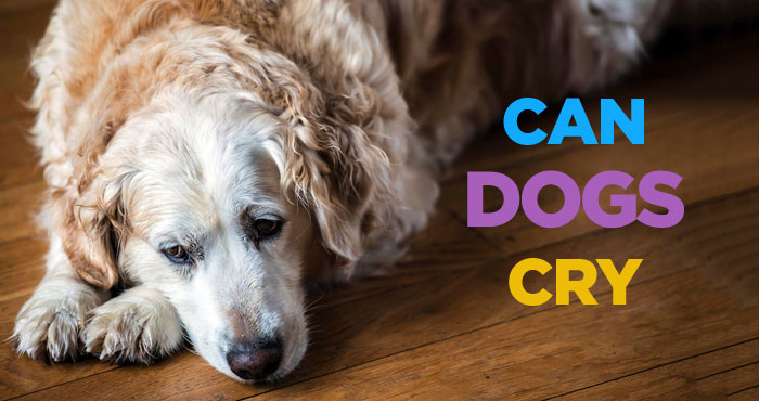 Can Dogs Cry? Why Do Dogs Cry? Myths and Reality of Dog Tears