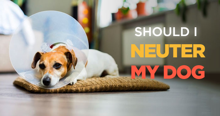Should I Neuter My Dog? Pros and Cons of Neutering a Dog
