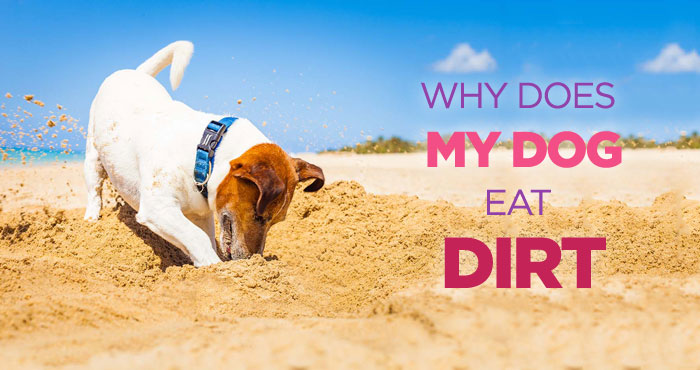 Why Do Dogs Eat Dirt: Nutritional Deficiency Could Be The Cause