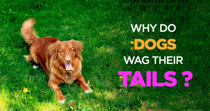 Dogs Wag Their Tails