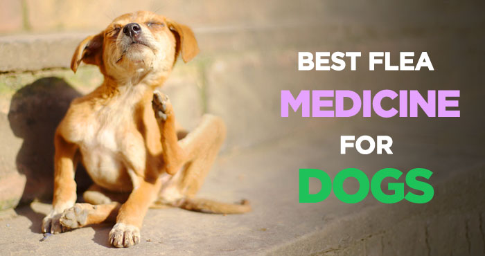 Best Flea Medicine for Dogs: Tick & Flea Control and Treatment