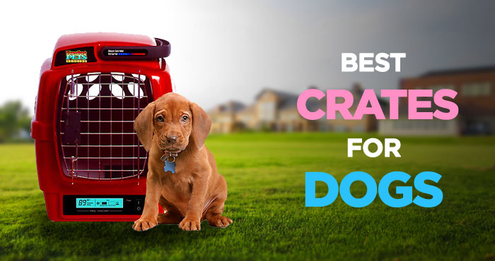Best Dog Crates: Creating a Safe Haven for Your Pooch