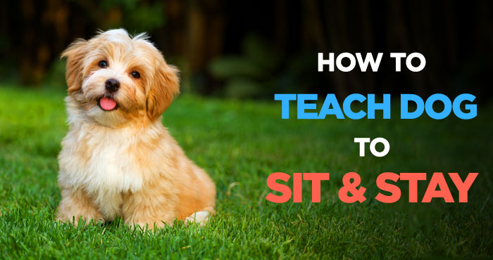 How to Teach a Dog to Sit