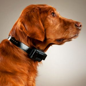 Best Bark Collars: Reviews & Buyers Guide to Stop Excessive Barking