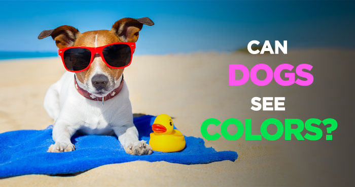 Can Dogs See Colors: Or Are They Completely Color Blind
