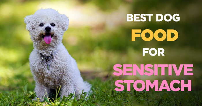 Best Dog Food for Sensitive Stomach: Ultimate Diet for Upset Tummies