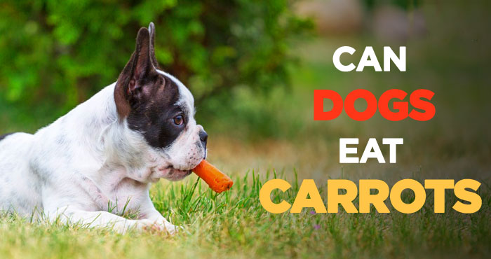Can Dogs Eat Carrots: Tasty, Nutritious and Incredibly Cheap Treats