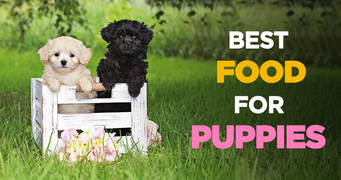 Best Puppy Food: Choosing The Best Dog Food for Puppies 2019