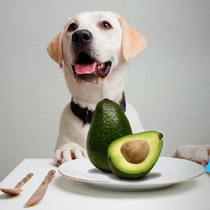 healthy fruits to eat is avocado a fruit or a vegetable