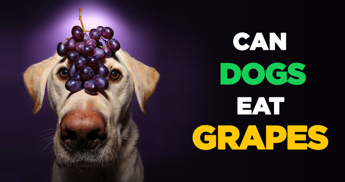 Can Dogs Eat Grapes: Raisin The Alarm on Grape Toxicity in Pups