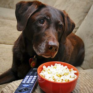 Can Dogs Eat Popcorn: Is Popcorn Bad for Dogs to Eat Before Bed?