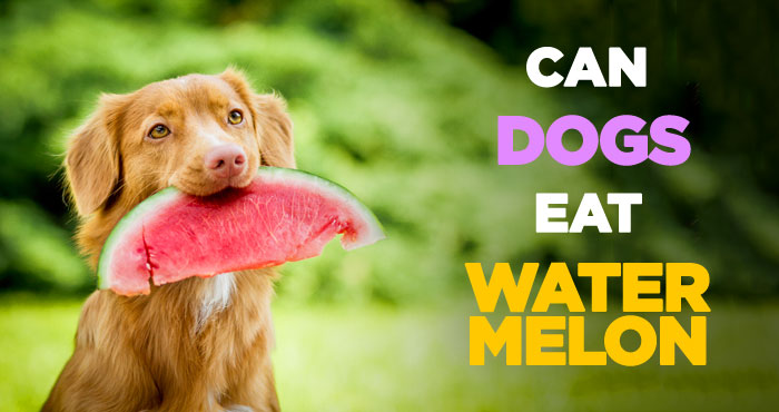 can dogs eat watermelon