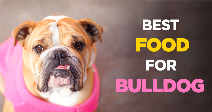 Best Dog Food for Bulldogs: A Guide to Bulldog Nutrition & Health