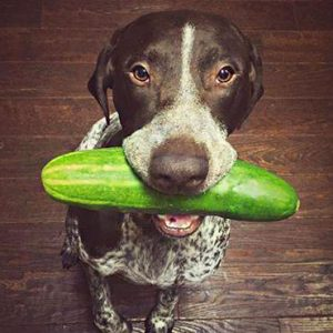 Can Dogs Eat Cucumbers: Are Cucumbers Good for Dogs to Eat Everyday