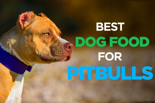 Best Dog Food for Pitbulls: Muscular Body Needs High Protein Diet