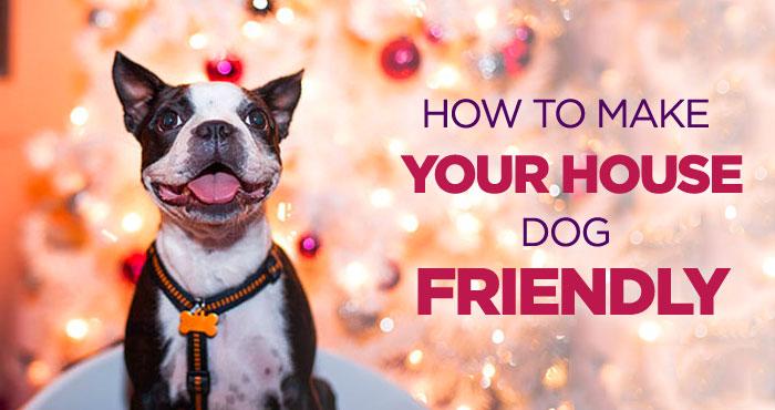 House Dog Friendly