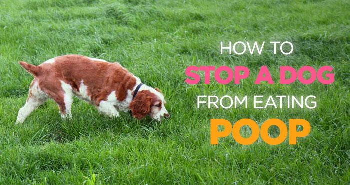 Eating Poop