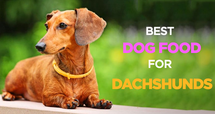 Best Dog Food for Dachshunds: Nutritionally Balanced Diet for Wieners