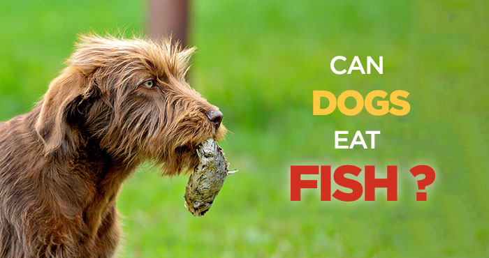 Can Dogs Eat Fish? Is Fish Bad for Dogs? The Biggest Myths About Raw Food