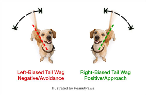 What a Dog's Tail Wags Really Mean
