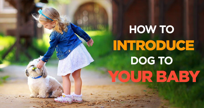 How to Introduce Dogs to Baby