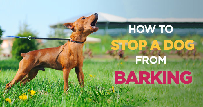 How to Stop a Dog From Barking: Effective Tips and Tricks