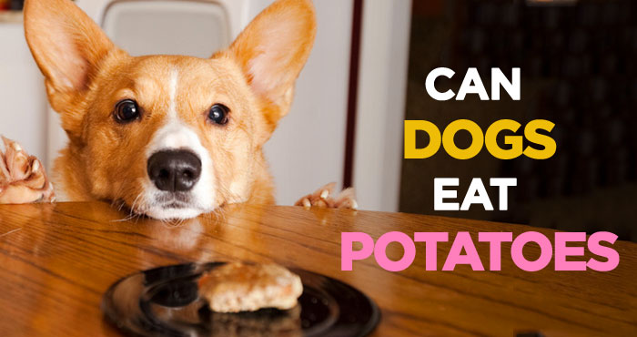 Can Dogs Eat Potatoes? Yes but Raw Potatoes Are Toxic to Dogs