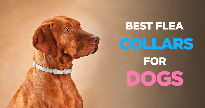 Best Flea Collar for Dogs: An Inexpensive Flea and Tick Treatment