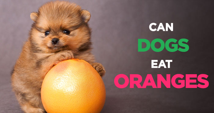 Can Dogs Eat Oranges: A Delicious and Juicy Fruit for Your Dog