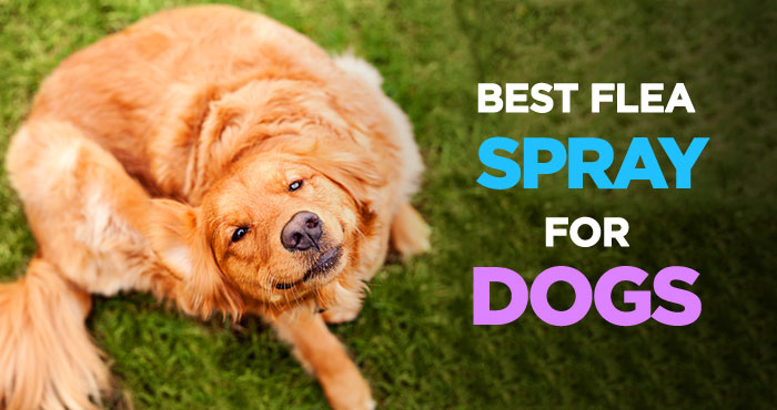Best Flea Spray: Easy & Affordable Way of Getting Rid of Fleas on Dogs