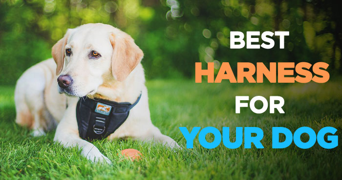 Best Dog Harness: Walking Your Dog Has Never Been So Easier and Fun