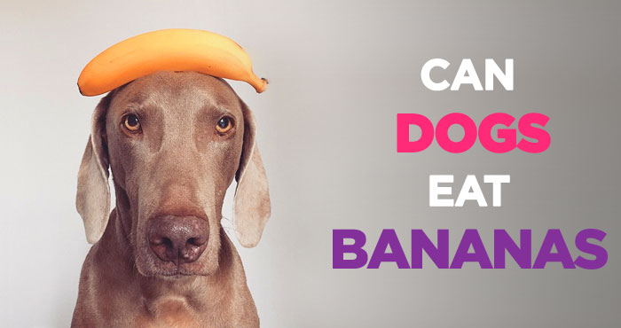 Can Dogs Eat Bananas: A Healthy and Inexpensive Treat for Dogs