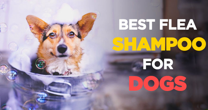 Best Flea Shampoo for Dogs: Best Way to Get Rid of Fleas on Puppies