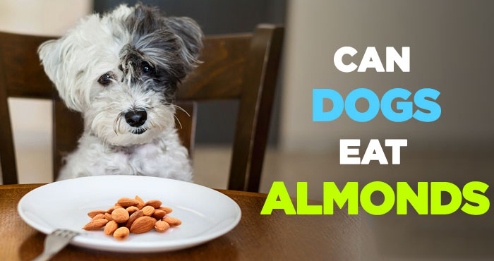 Can Dogs Eat Almonds: And Can Dogs Eat Almond Butter Everyday?