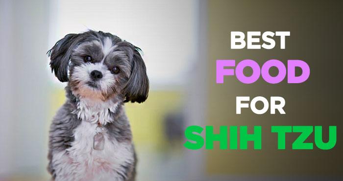 Best Dog Food for Shih Tzus: Choosing Right Shih Tzu Puppy Food